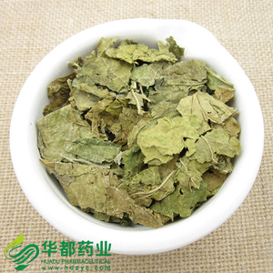 Mulberry Leaf / 桑叶 / Sang Ye