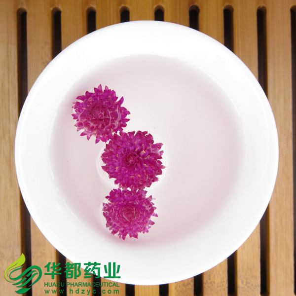 Flower of Globeamaranth / 千日红 / Qian Ri Hong