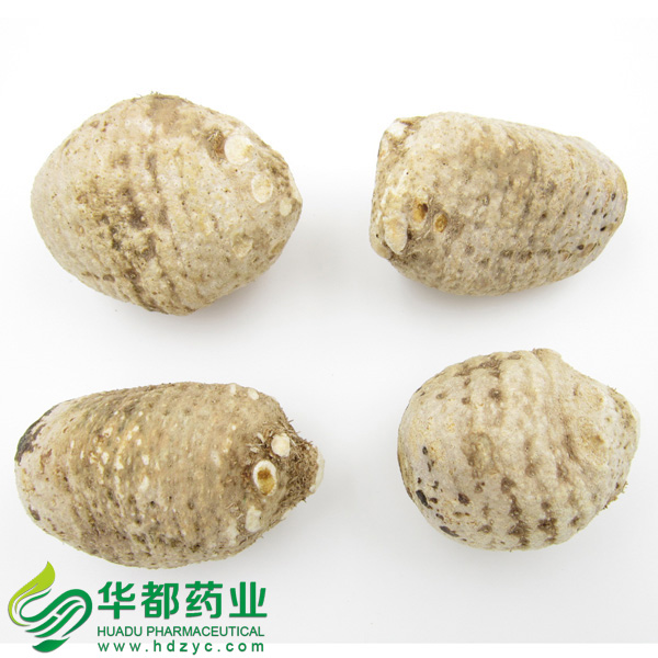 Water-Plantain Tuber / 泽泻 / Ze Xie